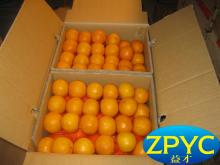 Chinese lugan mandarin orange 2015