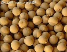 Dried Longan Fruits