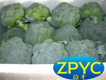 Chinese fresh broccoli for sale