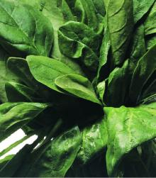 IQF SPINACH