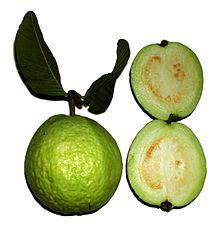 Guava   Juice   Concentrate ,Pulps,Puree