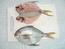 frozen wr  butter   fish (white pomfret)