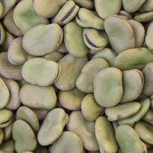 New crop broad beans(various sizes)
