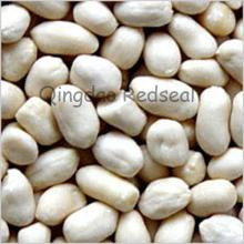 Blanched Round Type Peanut Kernel