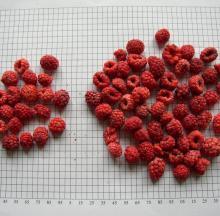 Dried added sugar Raspberry
