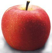 Chinese fresh red Fu-ji apple
