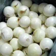 First grade fresh onion