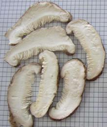 Freeze Dried Mushroom slices