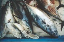 SQUID,COCUMBER, FISH MACKEREL
