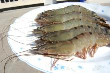 Black Tiger Shrimp(Penaeus monodon) HOSO