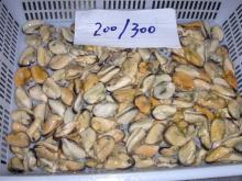 frozen mussels meat