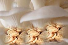 kripik jamur or mushroom chips