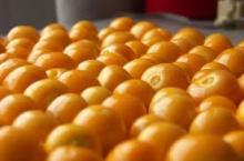 Golden berry / Uchuva