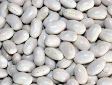 White Kidney Beans Japanese Type (Crop 2012)