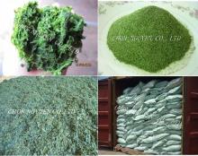 Ulva seaweed,