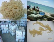 Spinosum seaweed, E.cottonii seaweed