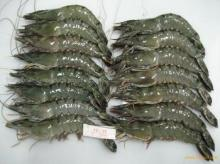 Frozen vietnam tiger prawn