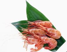 floating shrimp/fish food extruder machine