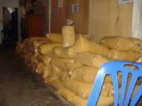 Organic   Coconut   Sugar  ( Bulk ) (USDA, EU, JAS, HALAL)