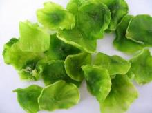 dehydrated lettuce flakes