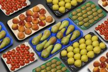 China Made Fruit Food PP Tray