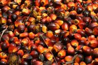 palm kennel and refined red palm oil