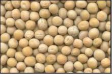 Yellow peas..,,