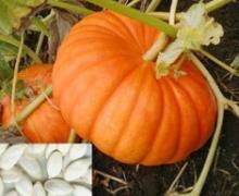 Pumpkin (cucurbita) seeds extract