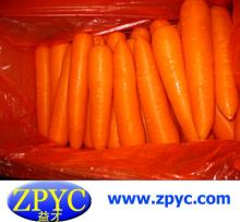 2015 fresh carrot hot sale