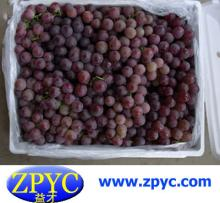 Fresh Chinese red grapes