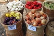 Fresh Vegetables In Bushel Baskets