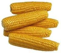 yellow red maize