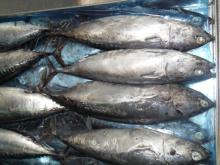 Fish Bullet Tuna