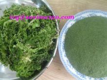 Ulva Lactuca seaweed