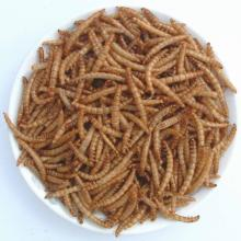 Microwave dried mealworm-Fish food,Aquarium Fish Food,pet food