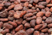 cocoa beans,coffee beans,cashew,shea nut,sesame