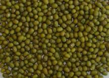Yellow   mung   beans  for sale