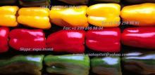 Yellow Pepper, Red pepper, Pepper Green, Pepper blond