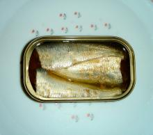 sardines in oil club can