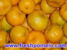 fresh citrus fruits,fruit and vegetables