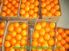 navel orang,pomelo,other citrus fruits