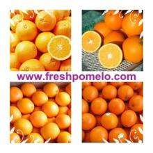 citrus fruit,navel orange,baby mandarin