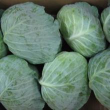 high-quality fresh cabbage