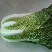 high-quality fresh chinese cabbage