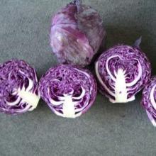high-quality fresh purple cabbage