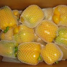 high-quality fresh color capsicum