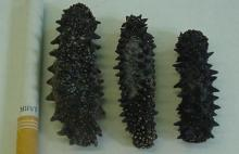 Dried Sea Cucumber Forsale
