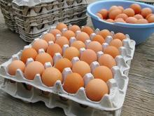 Fresh Table Chickens eggs For sale