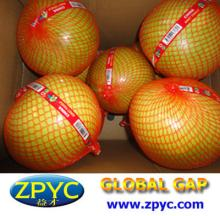Fresh sweet pinghe pomelo