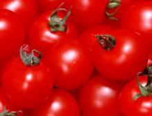 preserved tomato